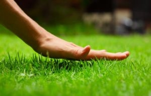 hand touching the tips of the grass in the lawn