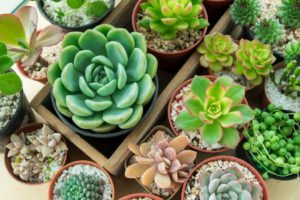 Different kinds of succulents