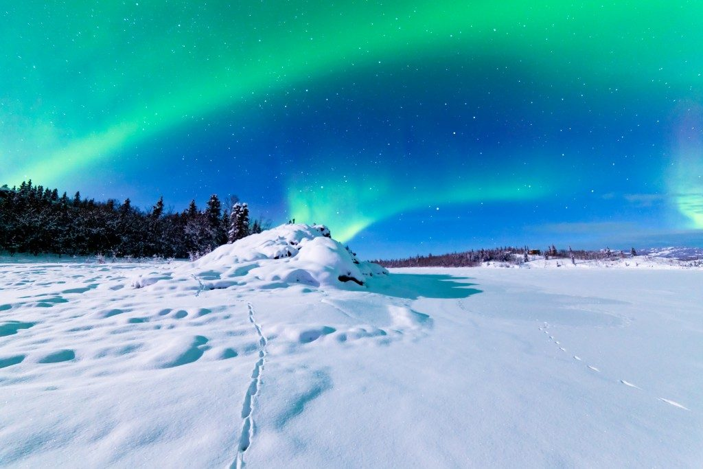 Spectacular display of intense Northern Lights or Aurora borealis or polar lights forming green swirls over snowy winter landscape