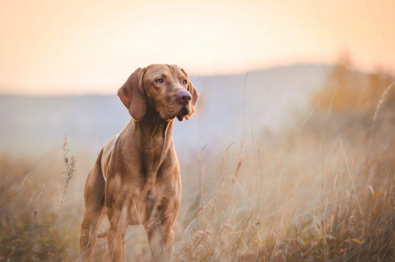 a brave doggo