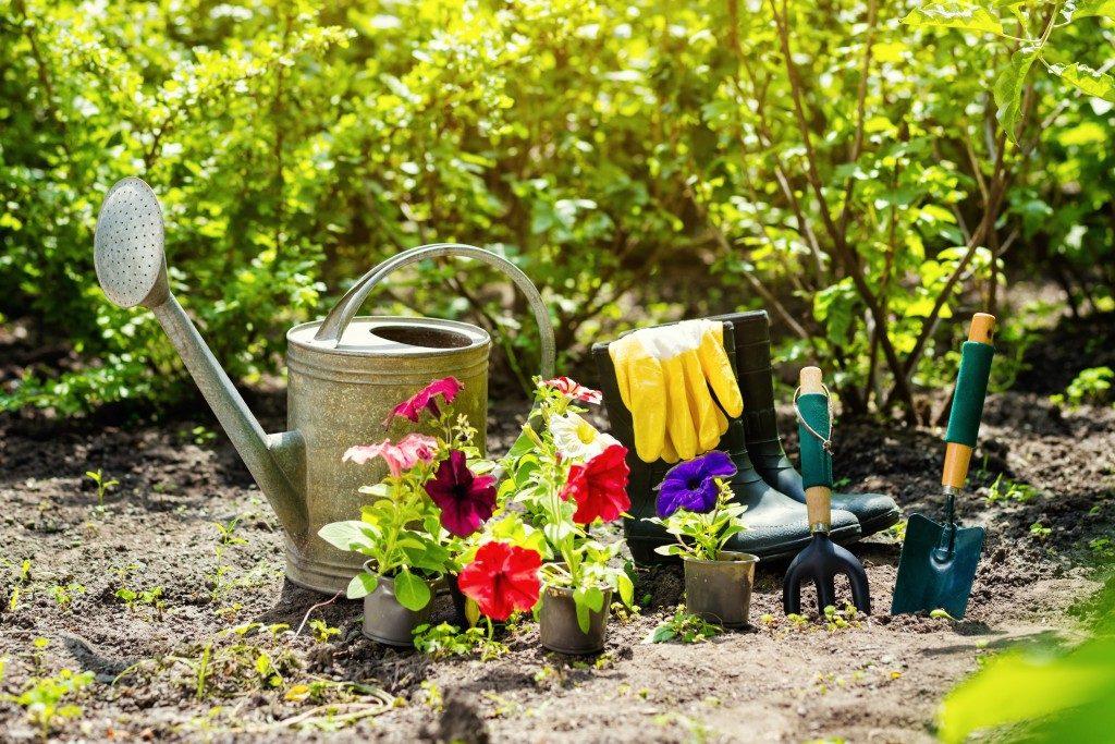 gardening tools qand plant
