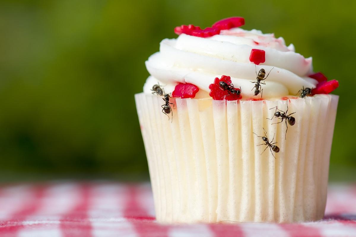 Ants on cupcake