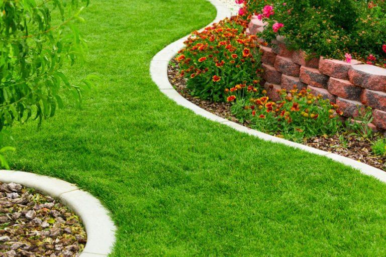 Grass on pathway