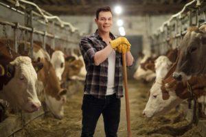 Cattle businessman